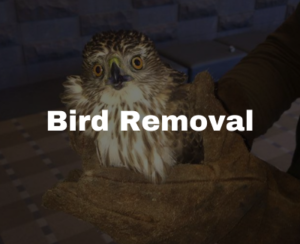 bird removal in Raleigh