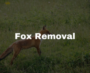 fox removal in Raleigh